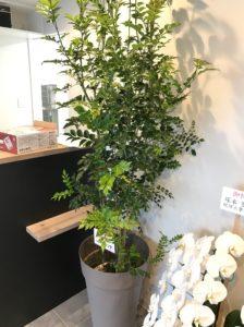新横浜周辺の動物病院開業祝いの観葉植物