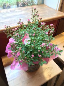 母の日花ギフト鉢花ミニバラ
