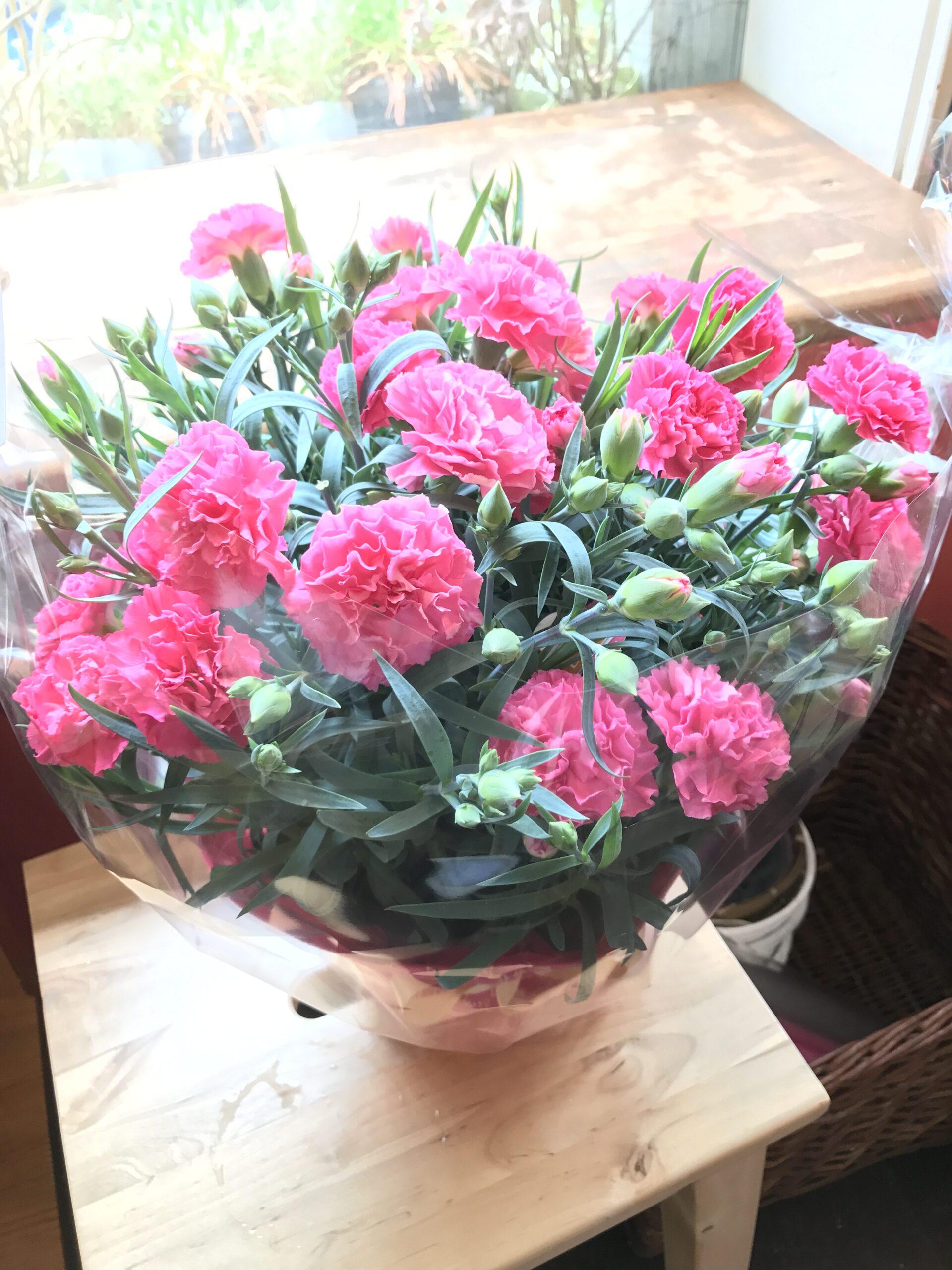 母の日花ギフト鉢花カーネーション