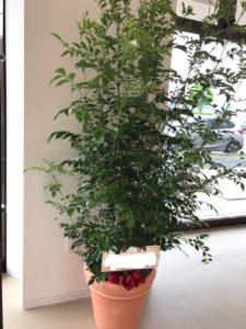 観葉植物 事務所移転祝い