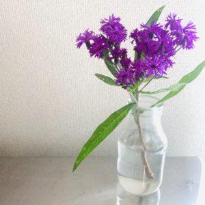 横浜お花定期便
